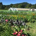 Biodynamic Workshop with Thea Maria Carlson, Executive Director of the National Biodynamic Association